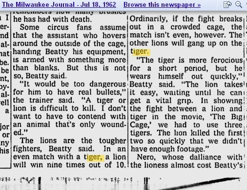 tiger lion video