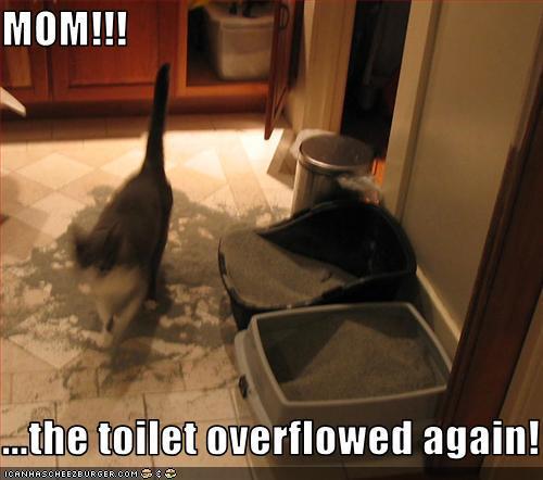 when to get cat neutered
