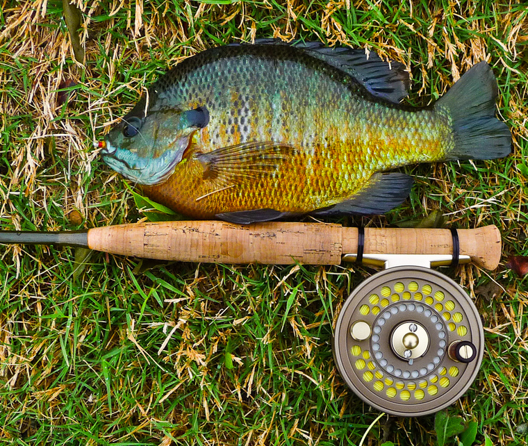 Ultralight fly fishing custom bluegill fish graphic on for Fly fishing for bluegill