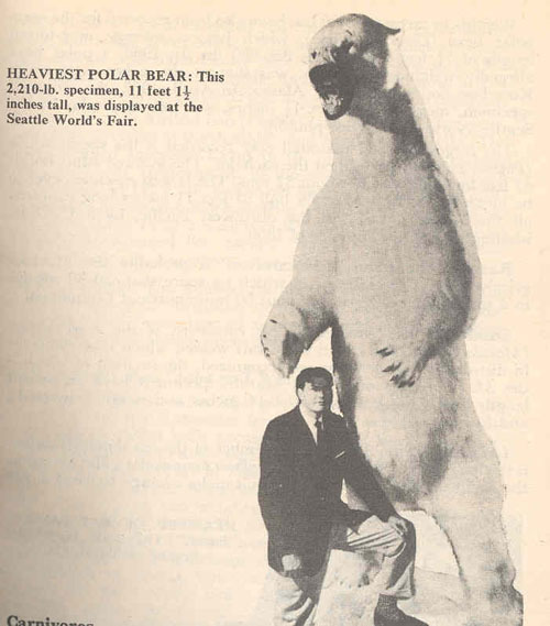 Pictures Of Impressive Bears